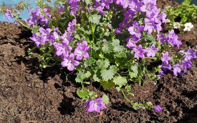 Wir pflanzen neue Blumen
